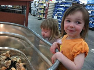 2011-D044-April-Girls with chicks at Rural King